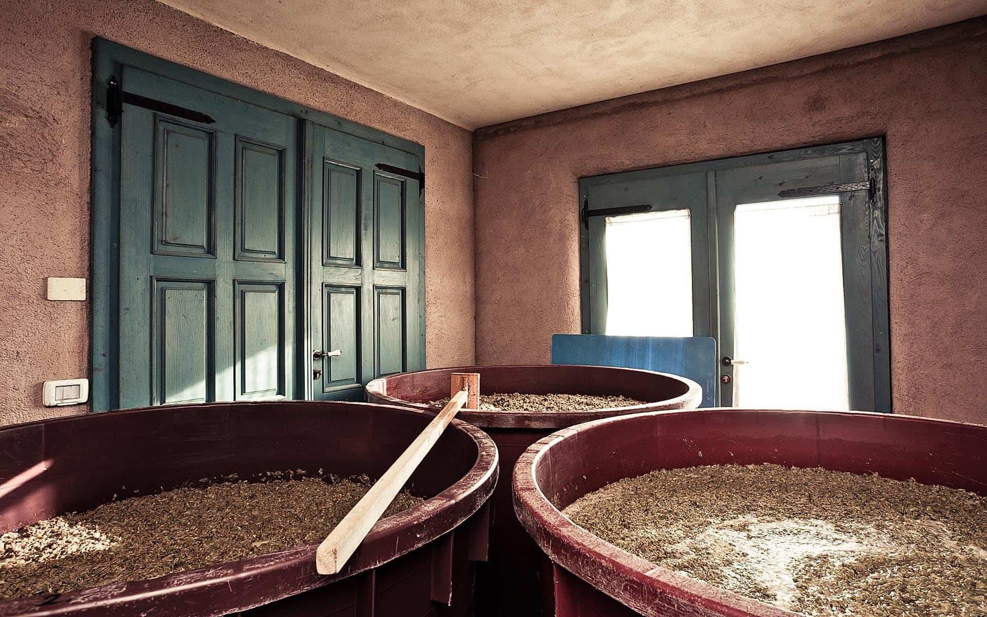maceracija belega grozdja v kleti Čotar, Gorjansko, Kras, Slovenija